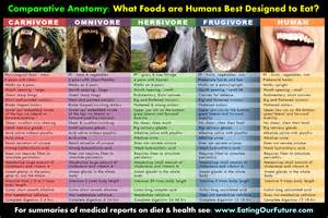 omnivore vegetarian digestion sd comparison picture 2