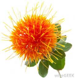 safflower picture 2