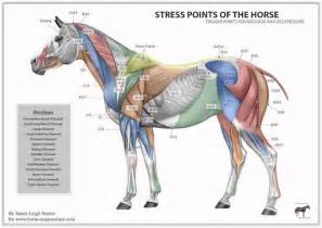 equine pain relief therapy picture 3