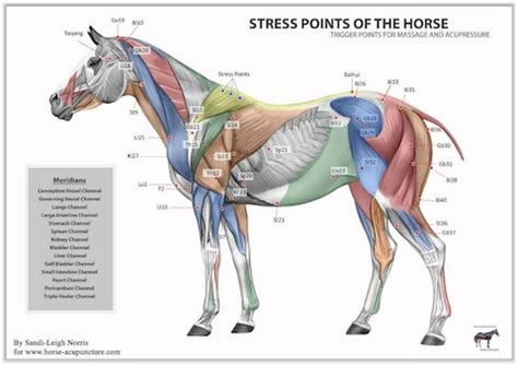 sacroiliac joint pressure points chart picture 2