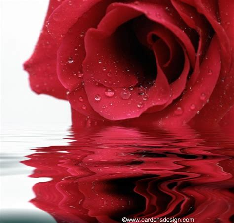 rose water for acne picture 1