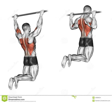 exercising muscle groups picture 1