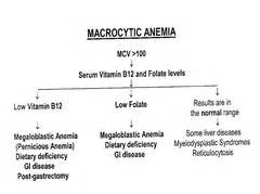 can hypothyroidism cause anemia picture 6