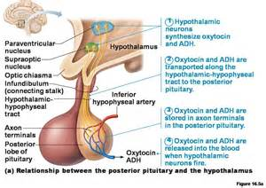 testosterone short definition picture 13