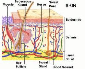 pheromones endocrine system picture 14