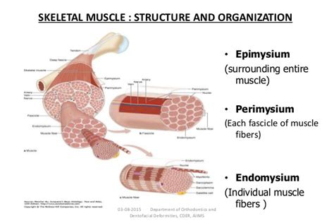 are smooth muscle multinucleated picture 6