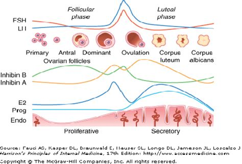 testosterone in menstrual cycle picture 1