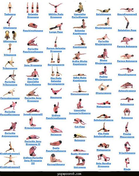 Hatha yoga and weight loss picture 6