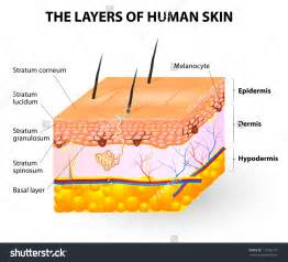 free illustrations of human skin picture 5