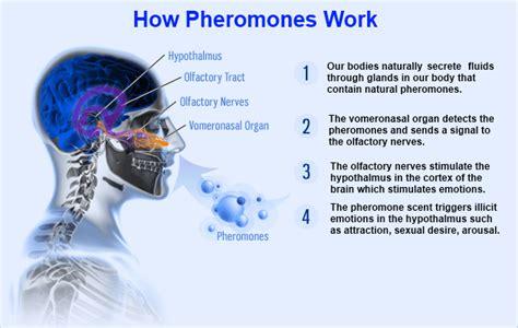 human pheromones 2013 picture 5