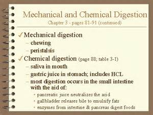 define chemical digestion picture 19