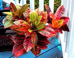 echinacea plant picture 13