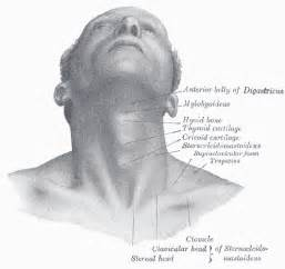 gland jaw joint pain picture 10