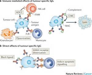 bladder cancer and bcg picture 9