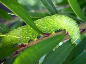 amphibian diet picture 5
