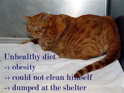 cat diet picture 13