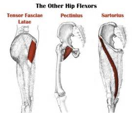 hip flexor muscle pull picture 17