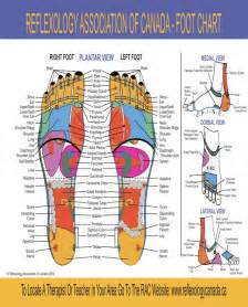 reflex points for circulation to penis picture 2