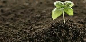 unsa man herbal plant para sa ubo picture 14