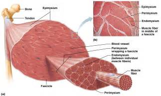 do plants have organized muscle fibers for movement picture 13