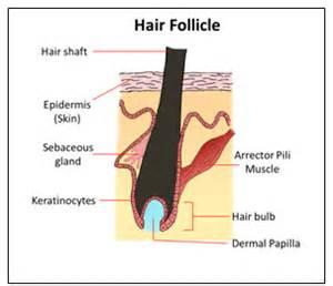 drug testng hair folicles picture 1