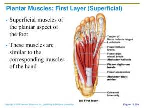 intrinsic muscle disease of the foot and ankle picture 18