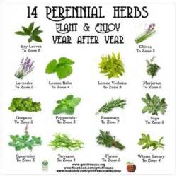 herbals that can be use for to do picture 3