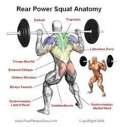 muscle squatting picture 9