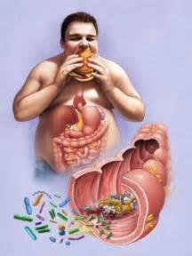 intestinal flora picture 3