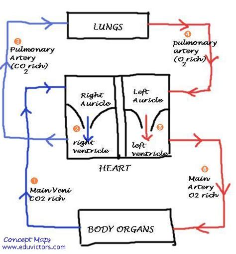 whay does having high increased blood flow to picture 5