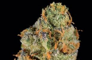 super strong weed strains thc 2014 picture 9