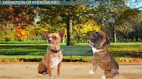 pheromones psychology definition picture 6