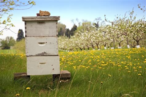 bee hives australia picture 13