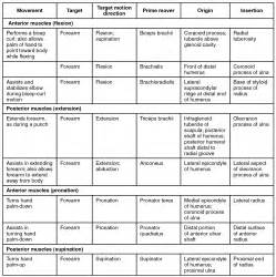 agonist and antagonist muscles list picture 13
