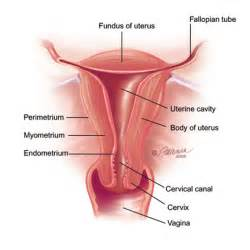 menjilat penis picture 5