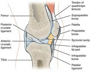 joint effusion suprapatellar region and medial joint compartment picture 11