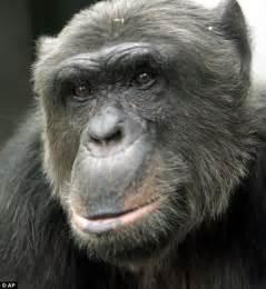 deciduous teeth in chimpanzees picture 15