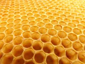 Honey comb for your colon picture 2
