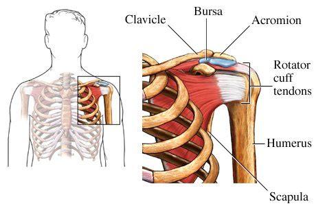 shoulder joint pain picture 18