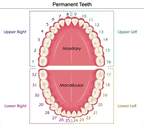 do your teeth change position picture 2