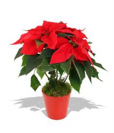 where to buy potted plants in metro manila picture 1