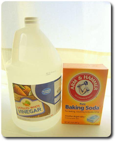 what natural products kill e.coli picture 18