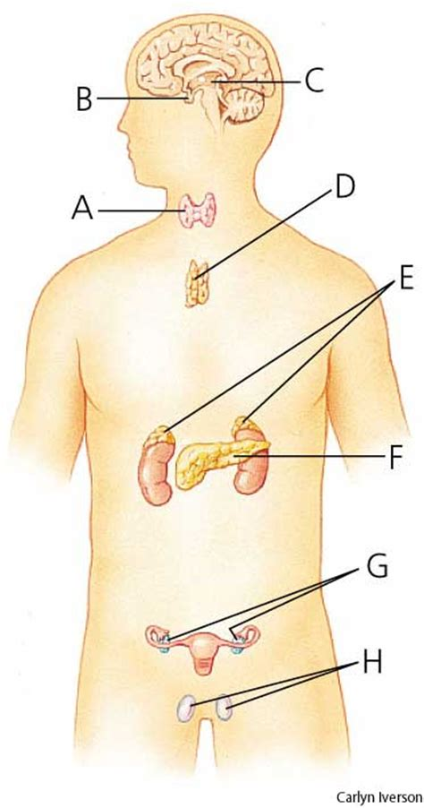 define: thyroid gland picture 9