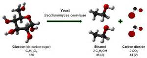 presence of sugar affect on yeast picture 2