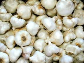 garlic picture 13