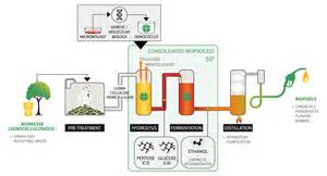 cellulosic ethanol and fermentation the site picture 7