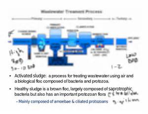 lecture note on microbial indication of ground water picture 9