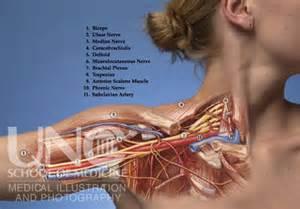 lymph node arm tingle tingling asleep picture 6