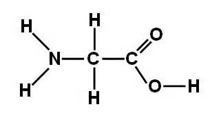 ageing amino acids picture 14