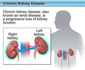 enhance kidney and liver function picture 7
